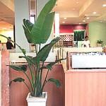 ファミリーレストラン グリーン装飾