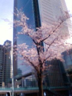 春の訪れ!