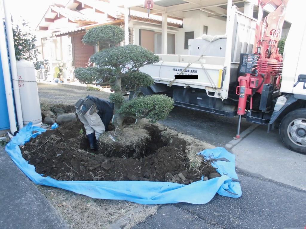 【番外編】 植木移植工事