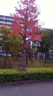 街路樹も色づき始めました