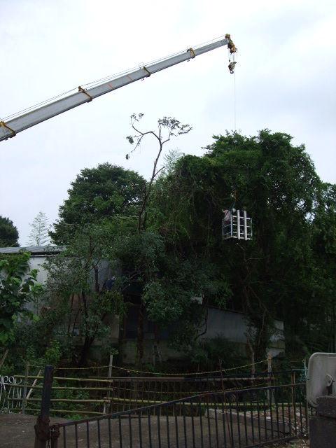 川の下流の樹木伐採・枝卸し作業です!